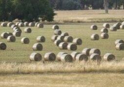 Round Bales (ef95b115-217d-4522-bc01-9a5fe7c08c19)
